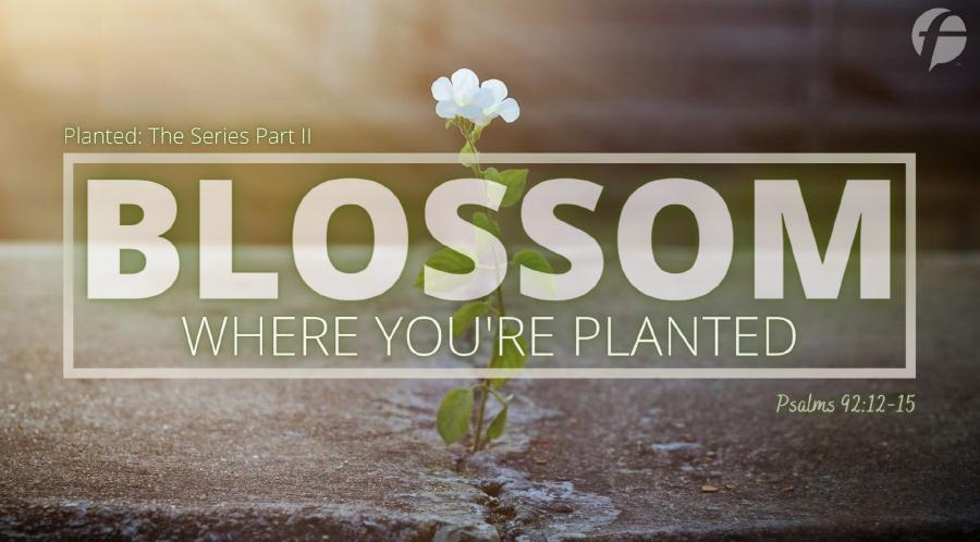 Blossom Where You're Planted