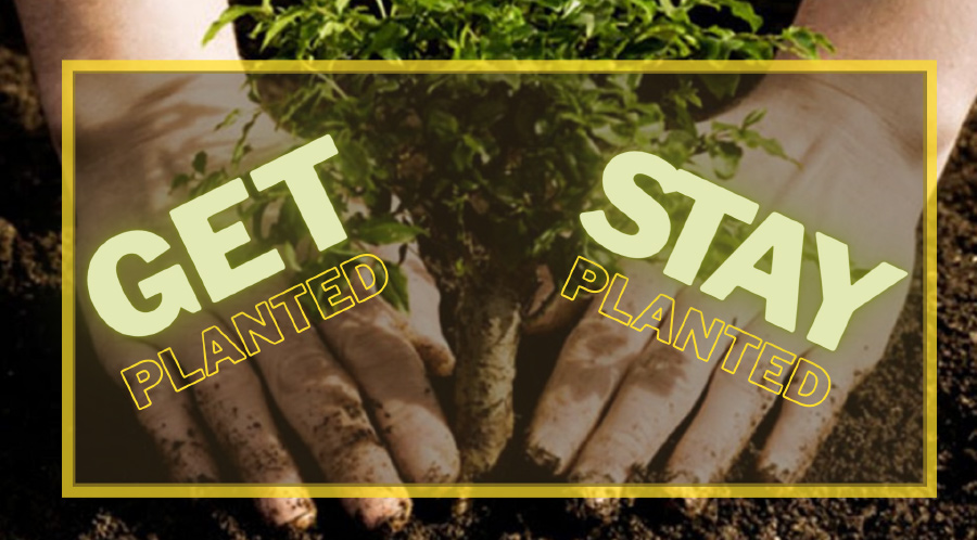 Get Planted, Stay Planted